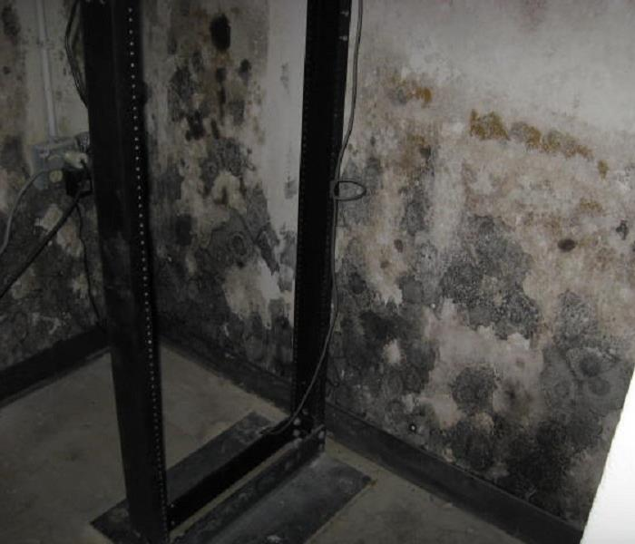 Commercial Mold Remedition